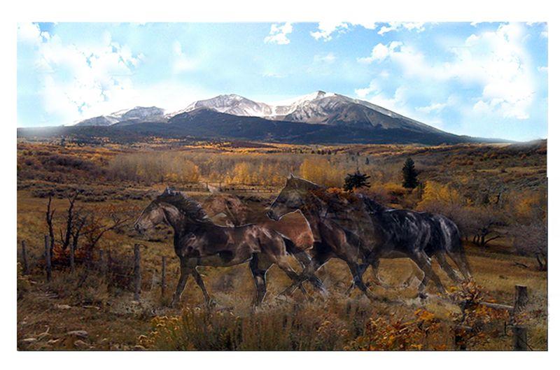 Horse Photofinaljen