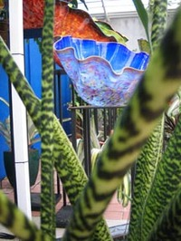 Chihuly_shell